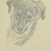 Собака, 1950(?)